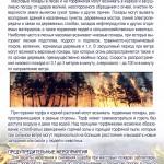 памятка (пожары в лесах и на торфянниках)